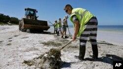 Work crews clean up dead fish along Coquina Beach in Bradenton Beach, Fla., Aug. 6, 2018.