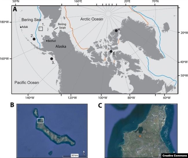 Fig. 1 Map of the Arctic and selected sites discussed in the study, including the study site.2. Sea ice diatom record from GC-33 (14), 3. Uk'37 alkenone paleotemperature record (13),This is an open-access article distributed under the terms of the Creative Commons Attribution-NonCommercial license, which permits use, distribution, and reproduction in any medium, so long as the resultant use is not for commercial advantage and provided the original work is properly cited.