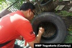 Staf WMP Yogyakarta memantau jentik di salah satu rumah warga kota Yogyakarta. (Foto: Courtesy/WMP Yogyakarta)