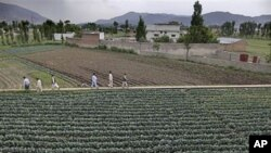 ډاکتر افریدي د سي آی اې د پلان سره سم په ابیت آباد کې د واکسین یو جعلي کمپیان پیل کړ