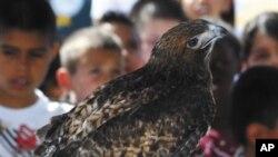 Anak-anak perlu didorong untuk memusatkan perhatian pada lingkungan dan keindahan alam, termasuk kepada burung-burung (foto: ilustrasi).