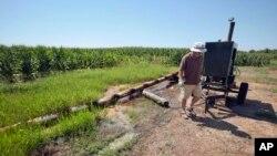 Một nông gia làm việc trong đồng bắp ở Tuckerm, bang Arkansas, Hoa Kỳ