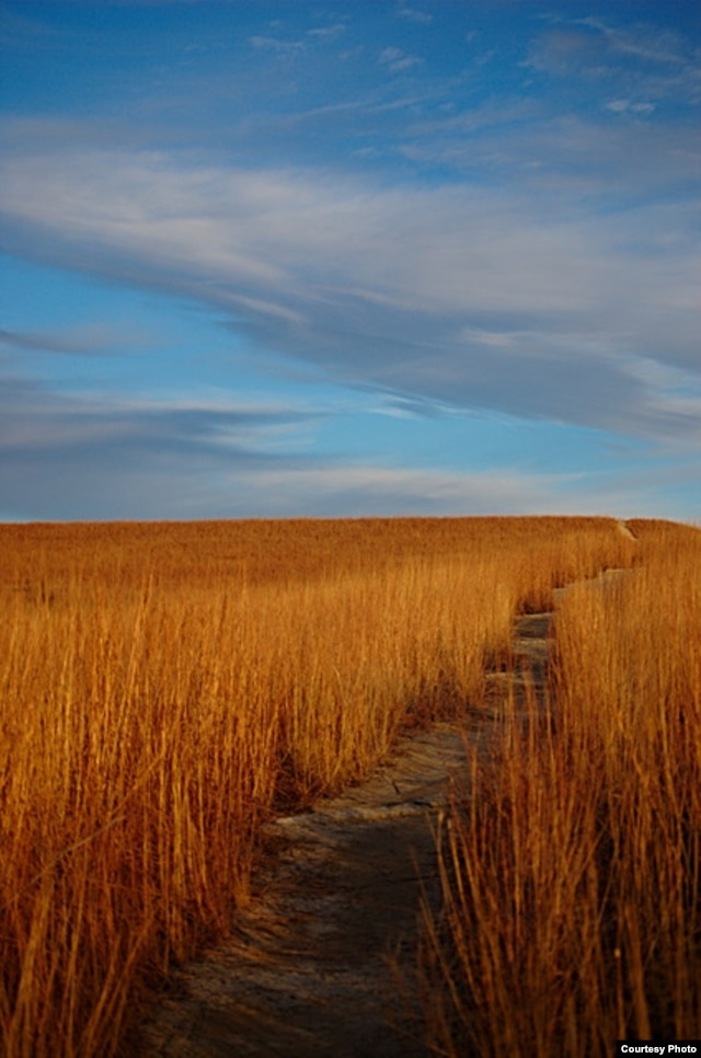 A footpath winds through the Konza preserve. (earlycj5, Flickr Creative Commons)