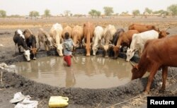 FILE - An internally displaced boy looks on as his family cattle drinks water at a camp near Kodok, in the north-eastern South Sudanese state of Western Nile, April 17, 2017.