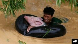 A resident uses an inflated inner tube to bring a pig to safety in floodwaters brought about by Typhoon Koppu at Zaragosa township, Nueva Ecija province, north of Manila, Philippines Monday, Oct. 19, 2015. (AP Photo/Bullit Marquez)