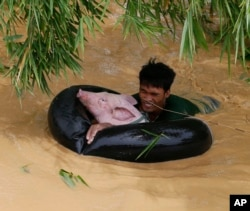 A resident uses an inflated tire interior to bring a pig to safety amidst raging floodwaters brought about by Typhoon Koppu at Zaragosa township, Nueva Ecija province, north of Manila, Philippines, Oct. 19, 2015.