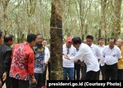 Presiden Joko Widodo di perkebunan karet di Sumatra Selatan, Maret 2019. (Foto: presidenri.go.id)