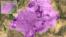 阿富汗喀布尔地图(谷歌地图)