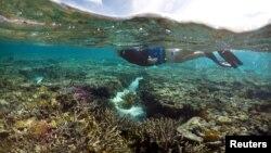 Great Barrier Reef nằm trong danh sách Di sản Thế giới của UNESCO, và mỗi năm thu về 3,5 tỷ đôla cho ngành du lịch Australia.