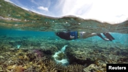 The coral reefs in the Great Barrier Reef in Australia are dying from pollution. Coastal sugar plantations allow fertilizer to run into the ocean water.