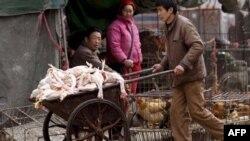 Chợ gia cầm tại Thượng Hải