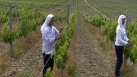 Gratë shqiptare dhe sipërmarrja