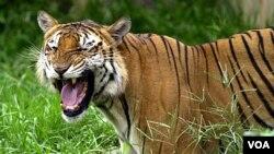 La reserva de Thompson albergaba una gran cantidad de especies como osos pardos, osos negros, leones, tigres y leopardos.