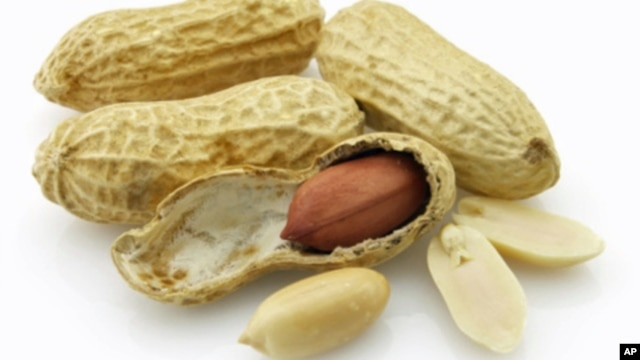 Similar to allergy shots for dust and pollen, feeding peanuts in tiny amounts is designed to reprogram the young patients' immune system so peanuts don't provoke life-threatening reactions.