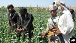 افغانستان ۷۴ در صد مواد مخدر دنیا را تامین می کند.