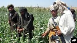 افغانستان په نړۍ کې د تاریاکو تر ټولو ستر تولیدونکی دی