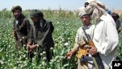 بیش از ۹۰ درصد تریاک جهان را افغانستان تولید می کند
