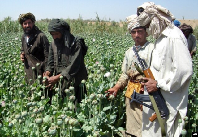 FILE - A Taliban militant is seen with an AK- 47 as farmers collect resin from poppies in an opium poppy field in Naway district of Helmand province, Afghanistan, April 25, 2008.