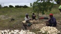 ONG defende resposta mais rápida do Governo moçambicano em Cabo Delgado