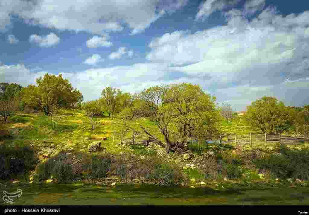 منطقه حفاظت شده تنگ بستانک معروف به بهشت گمشده در فاصله ۱۲۰ کیلومتری شیراز واقع است. عکس: حسین خسروی