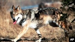 Changing the U.S. Endangered Species Act