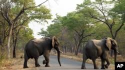 Slonovi u nacionalnom parku Hvange u Zimbabveu.