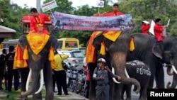 1일 태국 수도 방콕 북부지역 주민들이 코끼리를 이용해 오는 7일로 예정된 헌법 개정안 국민투표 관련 활동을 진행하고 있다.