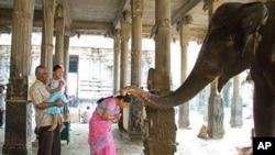 ہاتھی کی آشیرباد