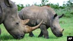 Tê giác trong khu vực bảo tồn