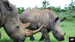 Tê giác lẽ ra phải được sống trong môi trường thiên nhiên không bị mối đe dọa từ con người