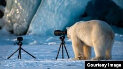 Highly Commended: 'PhotograBear' - Roie Galitz - Svalbard, Norway. (Comedy Wildlife Photography Awards)