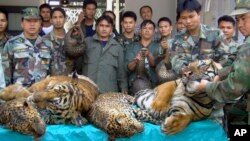 FILE - Thai Navy officers and forestry officials display seized dead tigers, leopards and pangolins in That Phanom district of Nakhon Phanom province, Thailand, Jan. 29, 2008. Conservation groups say Laos has promised to phase out tiger farms.