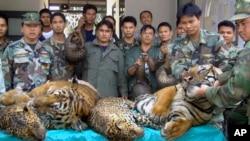Tentara Angkatan Laut Thailand dan pejabat kehutanan menampilkan harimau mati, macan tutul dan trenggiling di kabupaten Phanom provinsi Nakhon Phanom, timur laut Thailand, 29 Januari 2008 (Foto: dok).