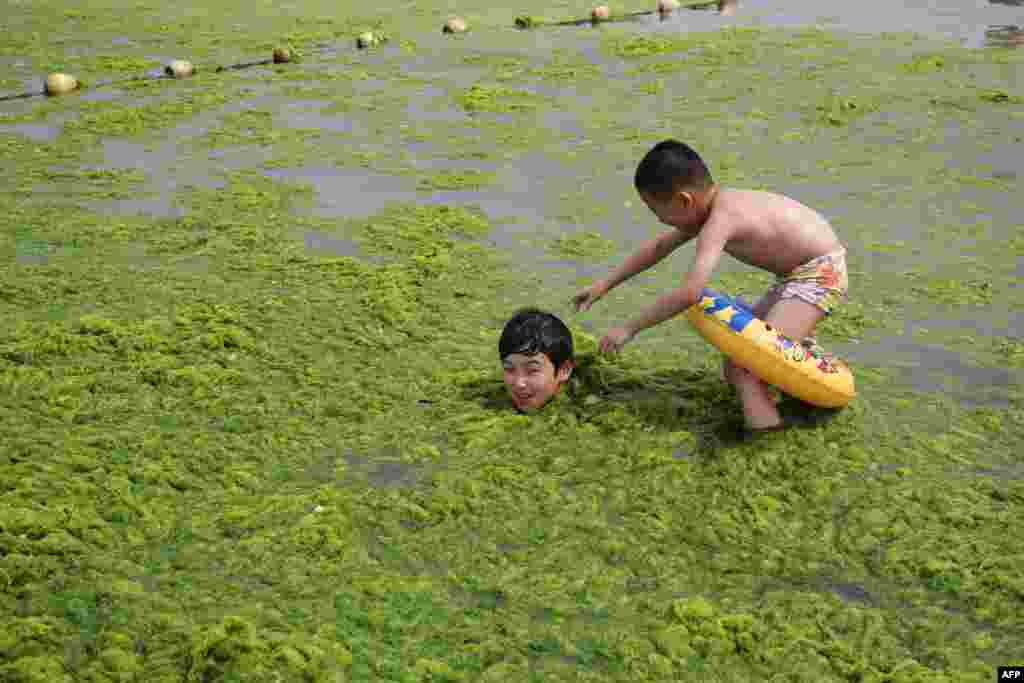 Children play in the water covered with algae at a beach in Qingdao, east China's Shandong province.