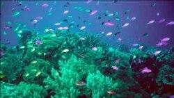 گزارش: مرجان ها و جلی فيش منبع مناسبی برای پروتئين های رنگی هستند