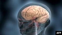 Truri i njeriut, ky organ i sofistikuar ende i panjohur plotësisht
