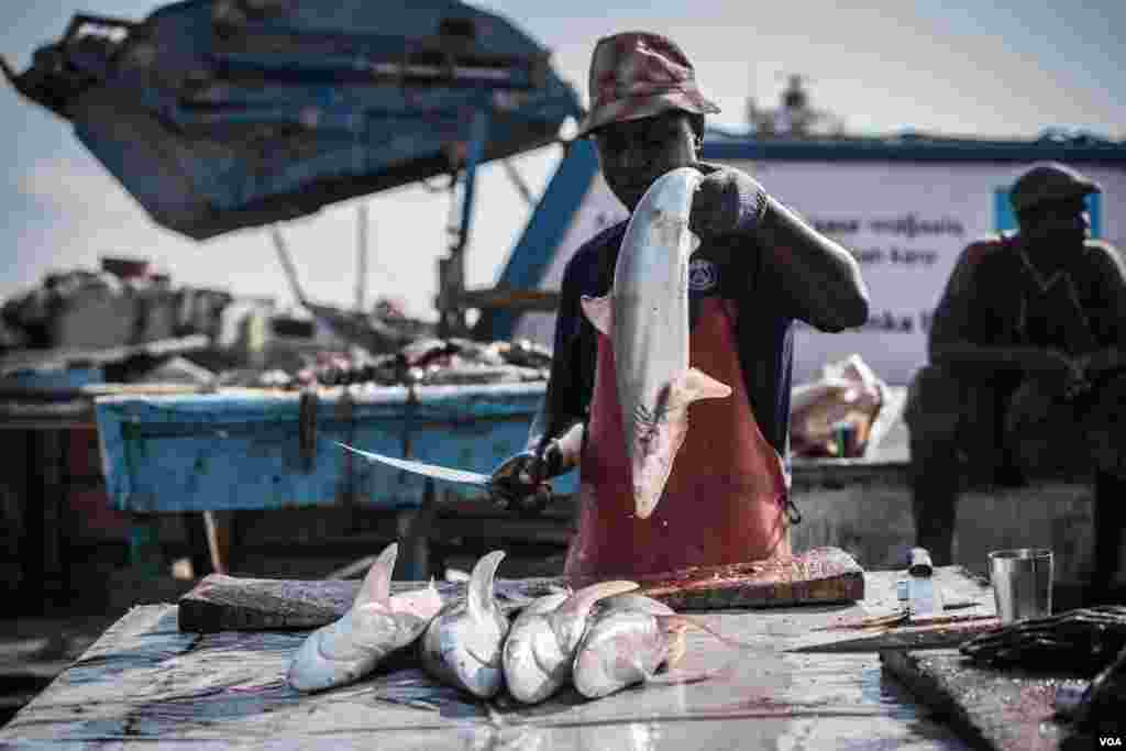 A man holds up a shark to chop up for its fins, liver, and meat in Bossaso, northern Somalia, in late March 2018. (J. Patinkin/VOA)