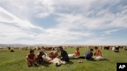FILE - Farmers shear sheep for wool, in Khovd Province, western Mongolia.