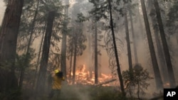 Las llamas ya han quemado unas 78 mil hectáreas de bosques, incluyendo parte del Parque Nacional de Yosemite.