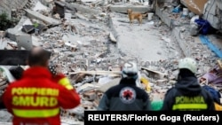 Albania, Durres, A rescue dog searches for survivors in a collapsed building in Durres