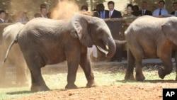 Zimbabwe Elephnats China