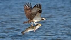 Protecting Imperiled Wildlife