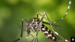 Zika mais grave do que se pensava