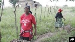 Des femmes swazi préparent une parcelle agricole