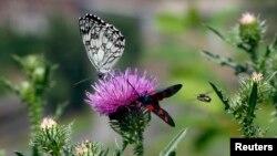 کشاورزی تجاری، به کاهش گونه های مختلف پروانه، به خصوص آنهایی که تخصص در گرده افشانی دارند، منجر شده است.