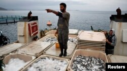 A worker stands atop thermal-insulated boxes with fish onboard a cargo ship at a fish farm of Selonda company near Sofiko village, Greece.