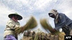 Pirinčana polja u Aziji