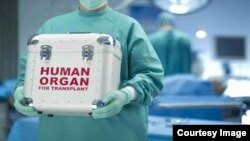 FILE - A human organ is transported for a transplant.