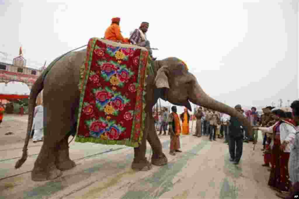 17일 쿰 벨라 축제가 열리고 있는 인도 갠지스강과 야무나강의 합류지점에서 코끼리에서 동전을 던져주는 힌두교인들.