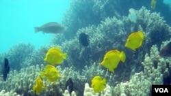 Kelebihan kadar CO2 di laut mengancam ekosistem yang ada di dalamnya (foto:dok).